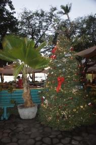 Maui Christmas Tree