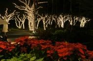 Christmas Lights at Grand Wailea