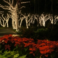 Christmas Lights at Grand Wailea