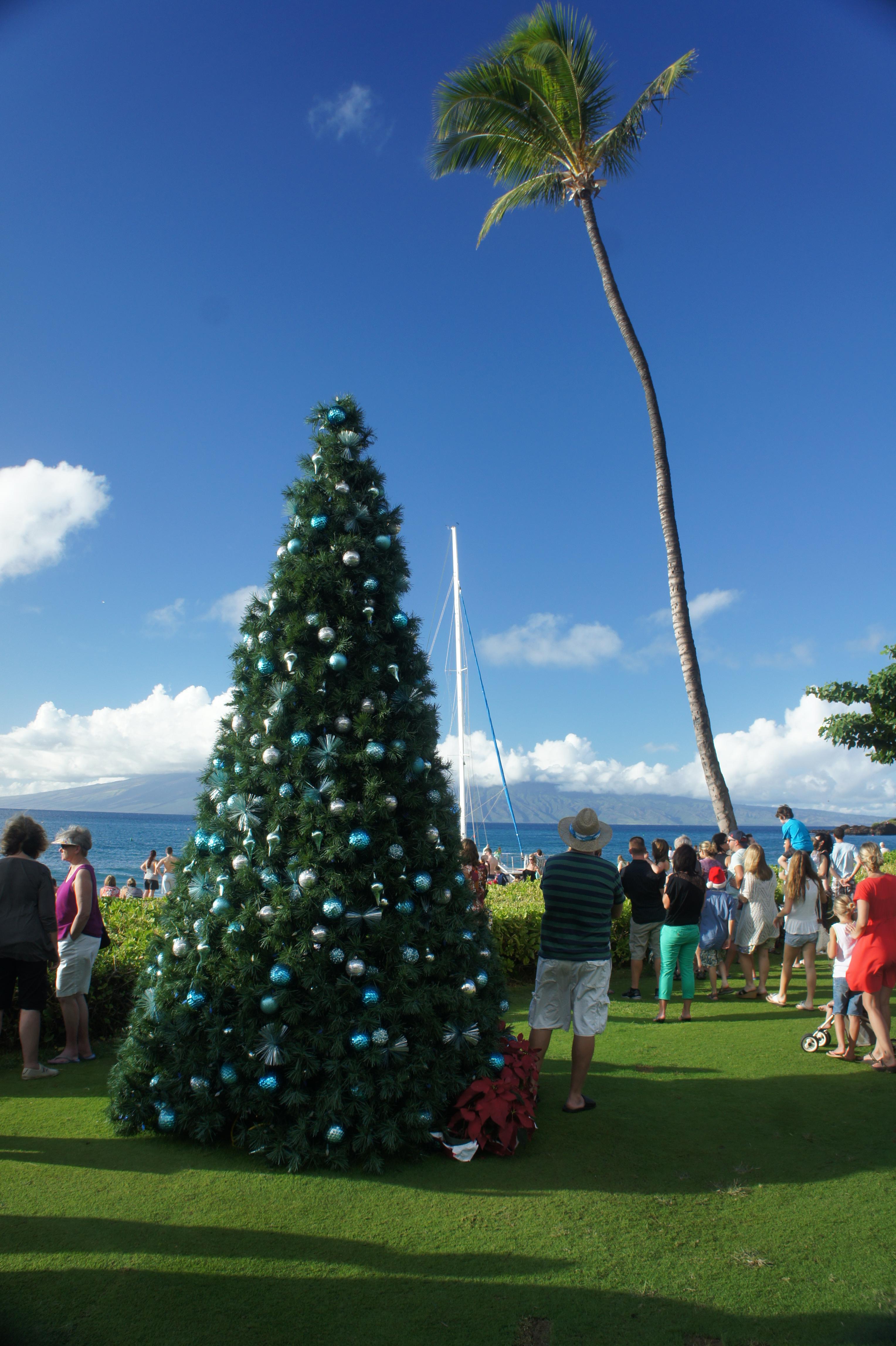 Christmas Tree On A Budget